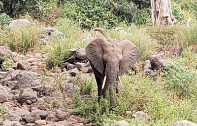 Kilimanjaro: Okita & Team Enjoy Visit to Lake Manyara National Park